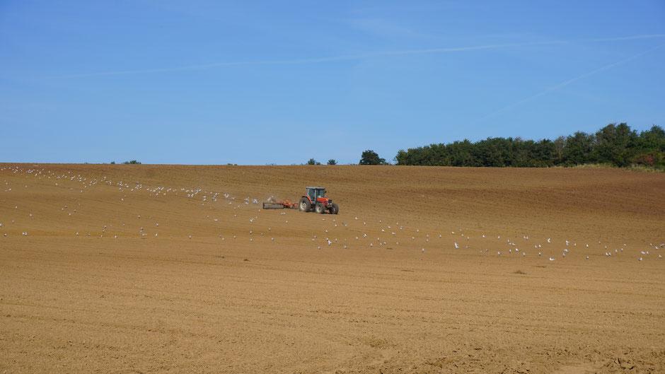 Auf so einem großen Feld wirkt auch ein großer Traktor klein ...