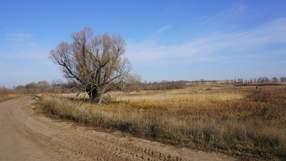 Ein stolzer Baum mitten in der großen Weite