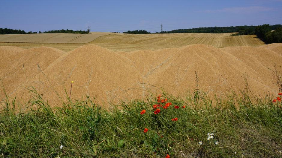 Reiche Ernte vor leerem Feld