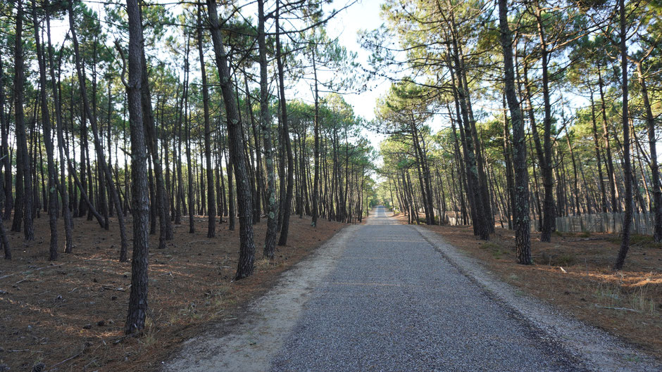 Am Radweg Richtung Naturreservat