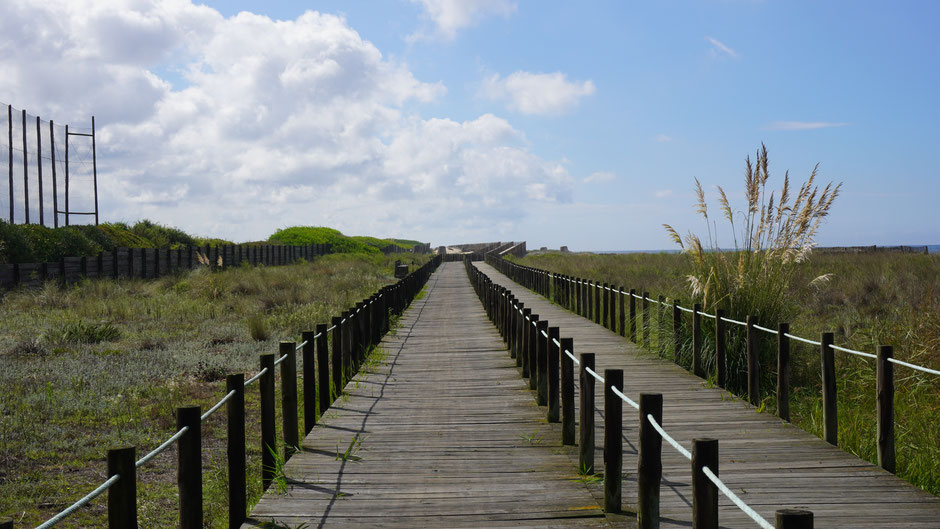 Ein Radweg auf einem Holzsteg durch ein kleines Naturschutzgebiet am Meer