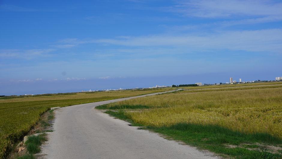 Flach durch Reisfelder, richtig zum Bolzen, und noch mehr zum Genießen ,,,