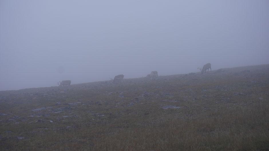 Nebel und Regen, alles kein Problem. Hauptsache Futter ...