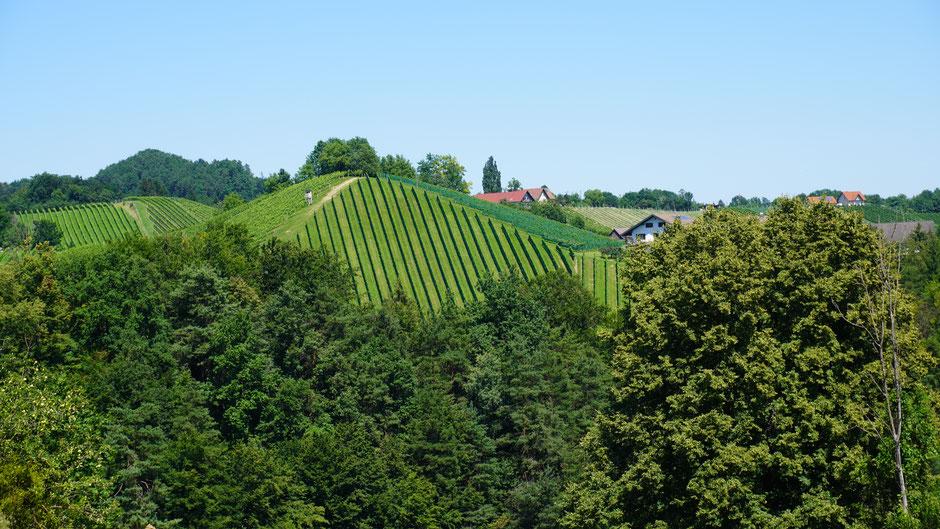 Weinbau in Hanglage