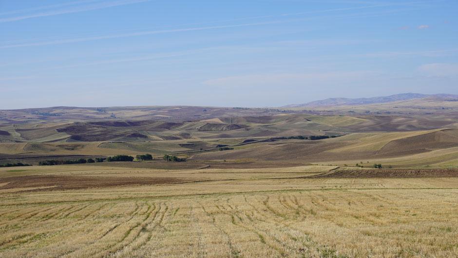 Pistazienfarbene Landschaft ...