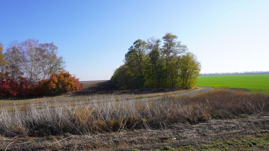 Herbstliches Arrangement mit Baumgruppe