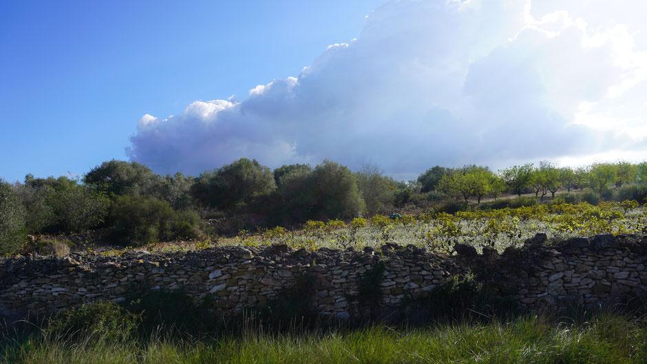 Wolkenziehen über einem Weinberg ...