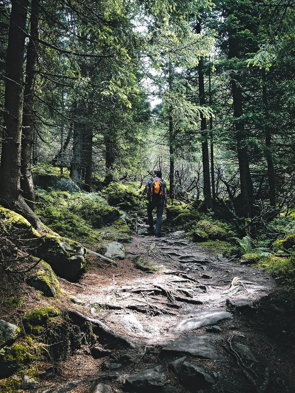 Zillergrund - Wanderung: von Bärenbad zur Einkehr zum Adlerblick