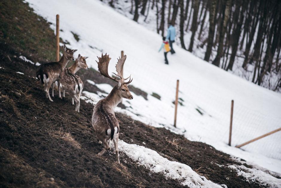 Rodelbahn Goglhof in Fügen/Fügenberg - Zillertal #rodelbahn #rodelnmitkindern #erlebnisweg #wildgehege #tirol #mountainhideaways