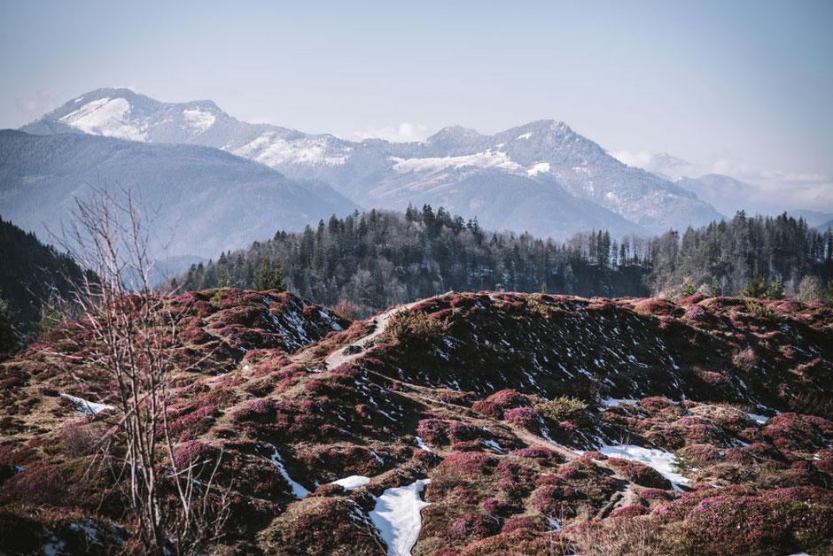 Schneerosenwanderung am Wilden Kaiser in Tirol, Rundwanderung vom Hintersteiner See zur Walleralm und Aussichtsberg Kreuzbichl   Wandern im Frühling - beste Zeit für die Erika-Blüte: März,April    #wilderkaiser #kitzbüheleralpen #mountainhideaways