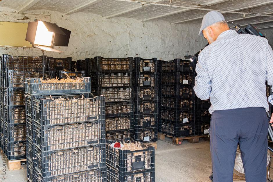 Safran de Cotchia, RTBF, Bulbes de crocus ou bulbes à Safran, Belgique, Wasseiges. Photo Léonard Eric
