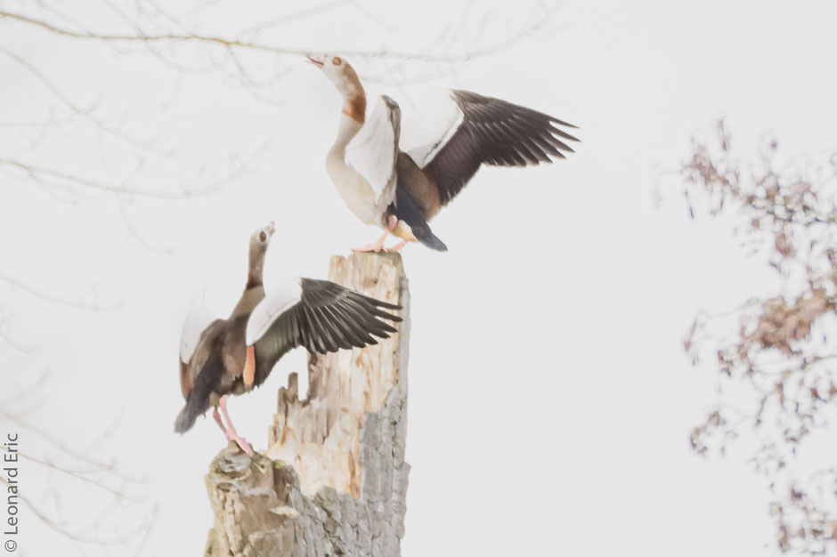 Photo animalière, Le plaisir photographique, Léonard Eric, sur un arbre