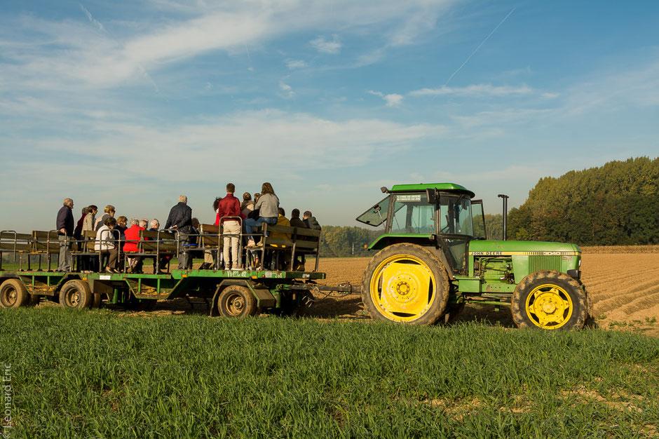Visite, tourisme, fleurs, safran, Wasseiges, Safran de Cotchia, Wallonie, tracteur, charriot.