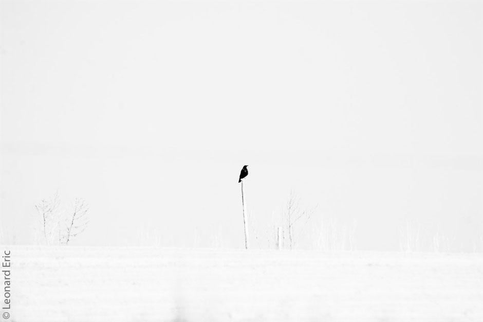 Le-plaisir-photographique. Eric-Leonard. -Mi photos / mi peintures. Le Corbeau.