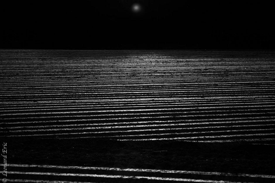 Le-plaisir-photographique. Eric-Leonard. Photos-Mi photos / Mi peintures-Fantastique - Noir et Blanc, Reflet sur un champs de pomme de terre.