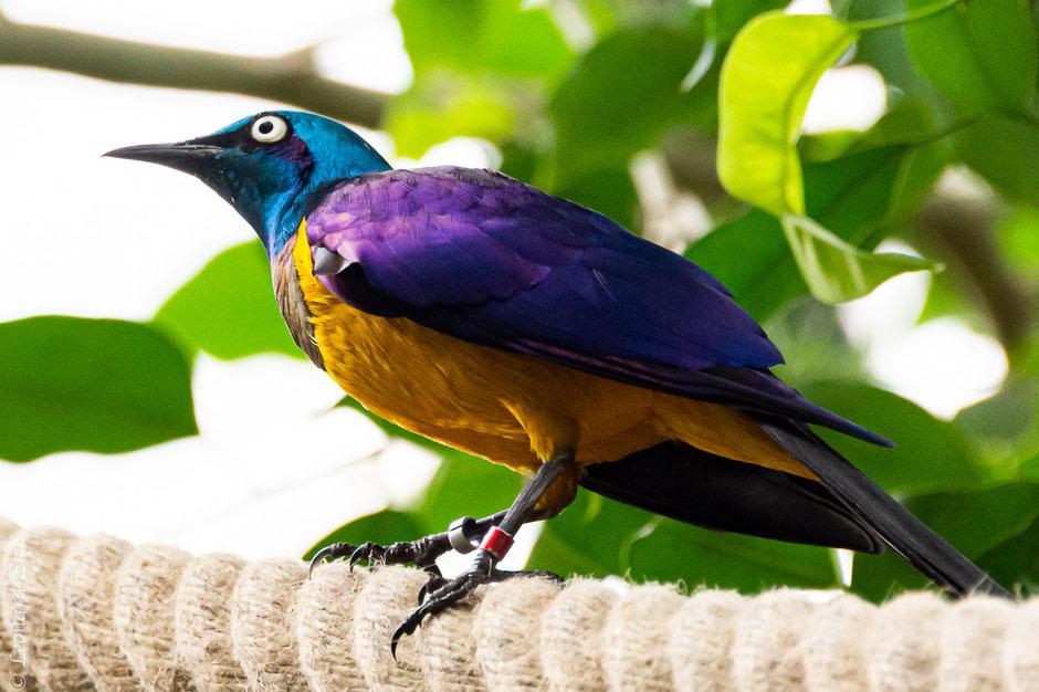 Photo animalière, Le plaisir photographique, Léonard Eric, beauté de la nature