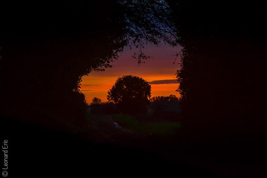 Le plaisir photographique. Eric-Léonard. Photos/Paysage/ Derrière le bois.
