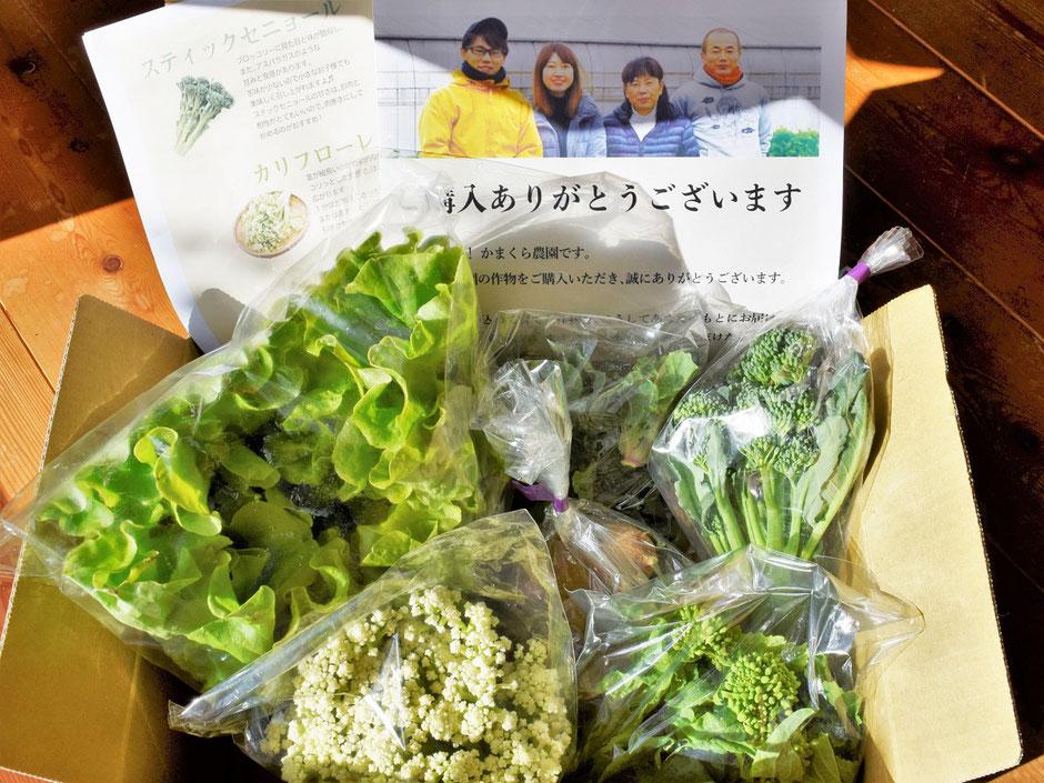 野菜セットの参考画像↑