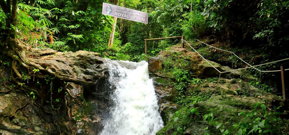 De machtige natuur van het Belum Rainforest (Pulau Banding) in West-Maleisië