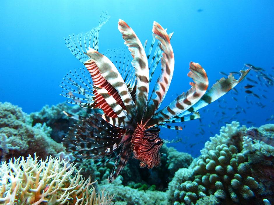 De fascinerende onderwaterwereld in de omgeving van Sipadan, Mabul en Kapalai in Sabah op Borneo
