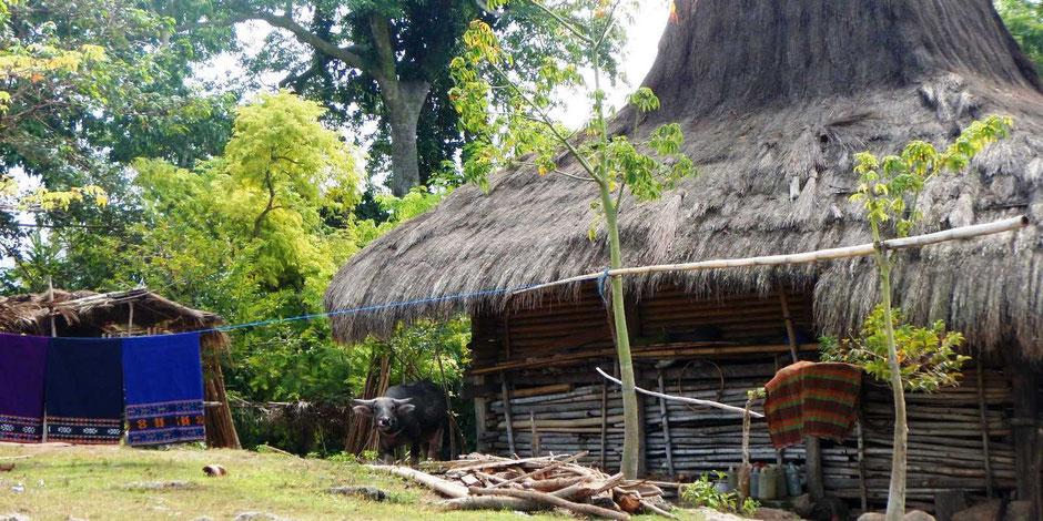 Traditioneel met stro bedekt huis dichtbij Waikabubak op Sumba