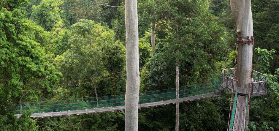 Canopy Walk door de jungle van Danum Valley in Sabah op Borneo