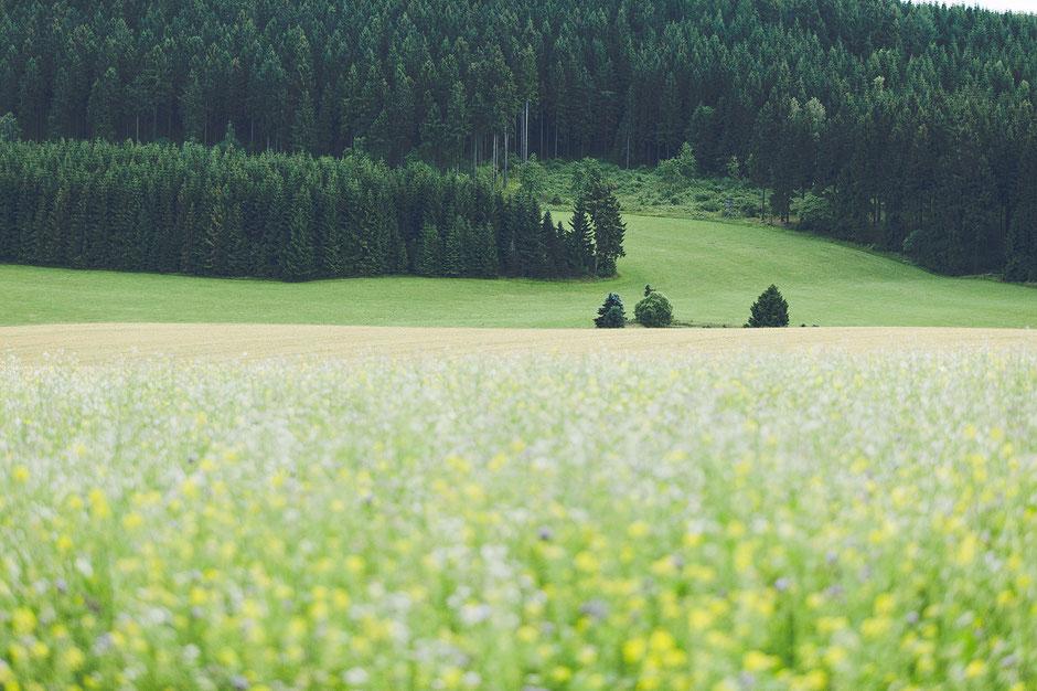ruhige hochzeitslocation erzgebirge