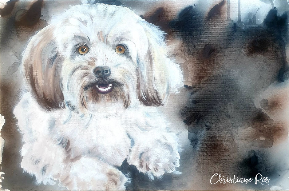 gemaltes Bild Hund Bolonka Zwetna © Christiane Ros