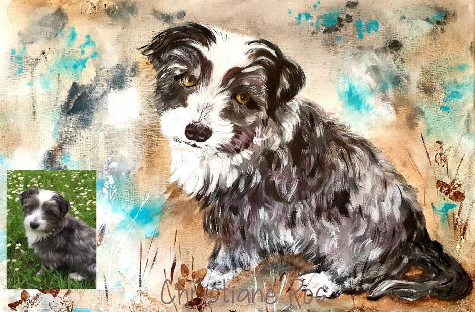 gemaltes Bild Hund Havaneser © Christiane Ros