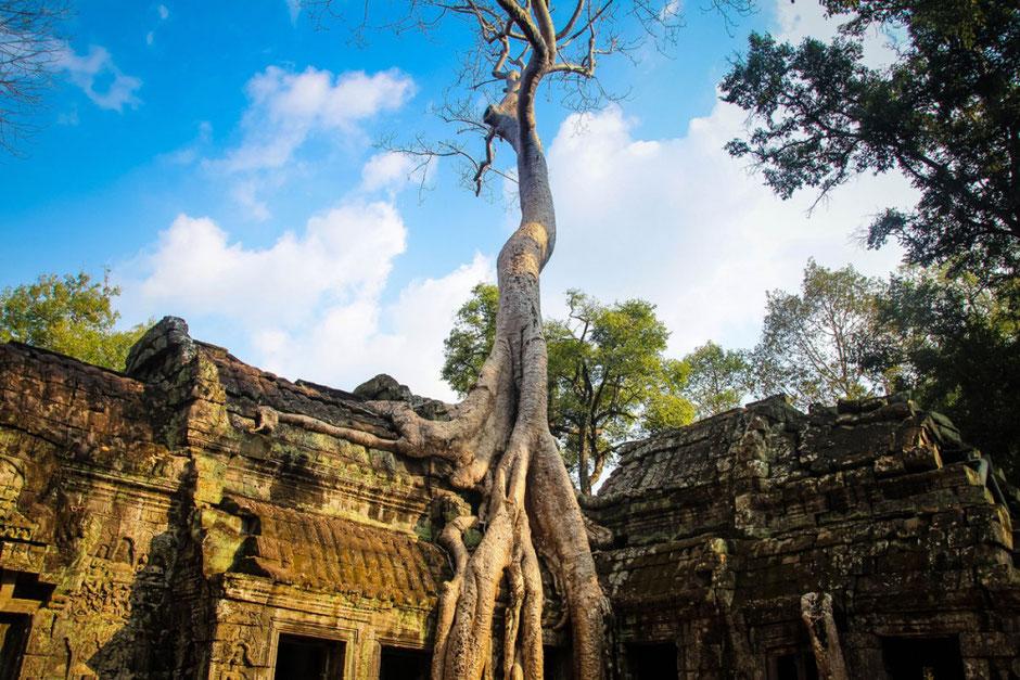 Árbol crece en tejado de templo antiguo