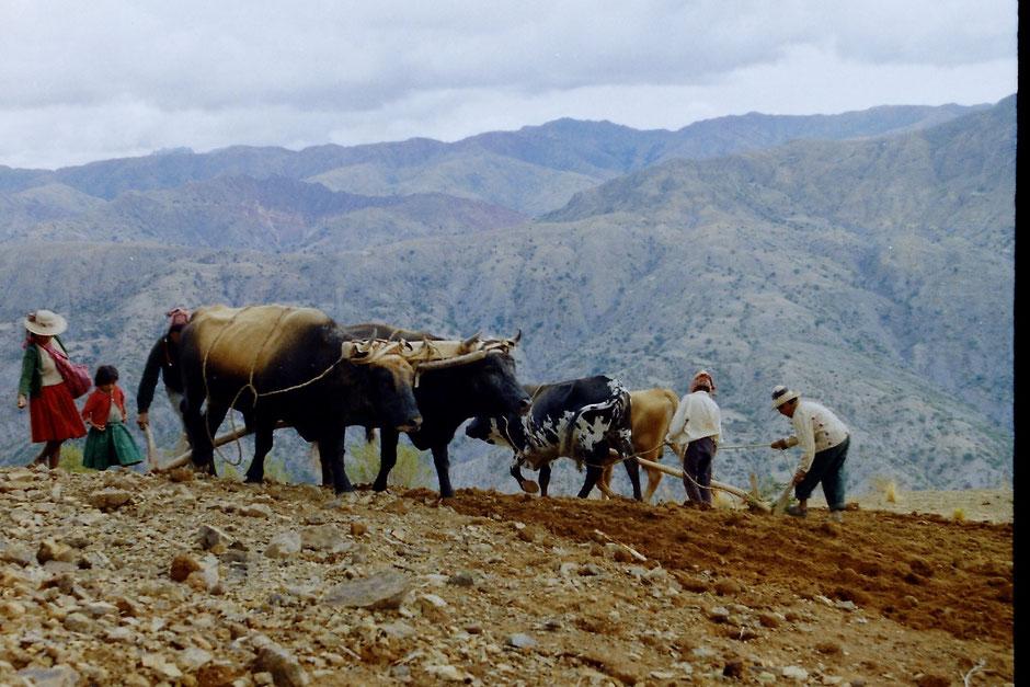Photo 2: Norte-Potosí valleys (Laurence Charlier).
