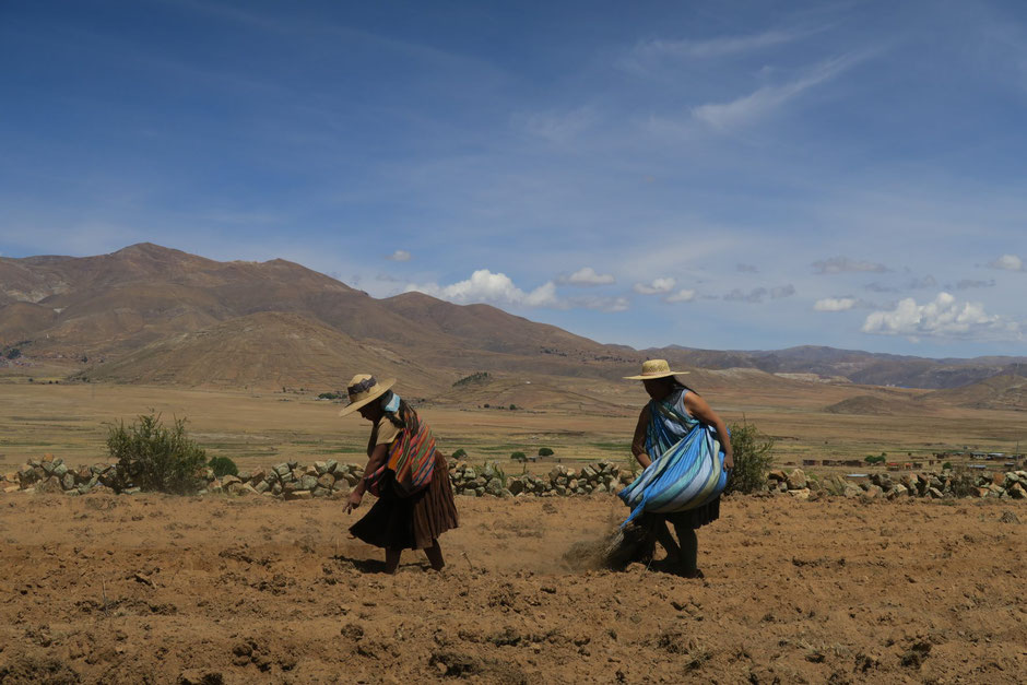 Photo 1: The High-Plateaus of Norte-Potosí, sowing potatoes. (Laurence Charlier)