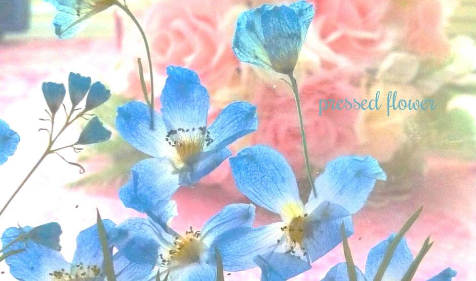 ブルー 青 押し花