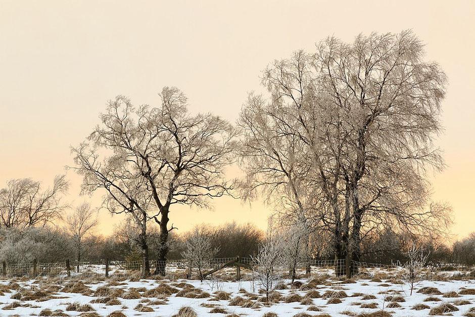 Ein letzter Lichtblick am Ende des frostigen Tages...
