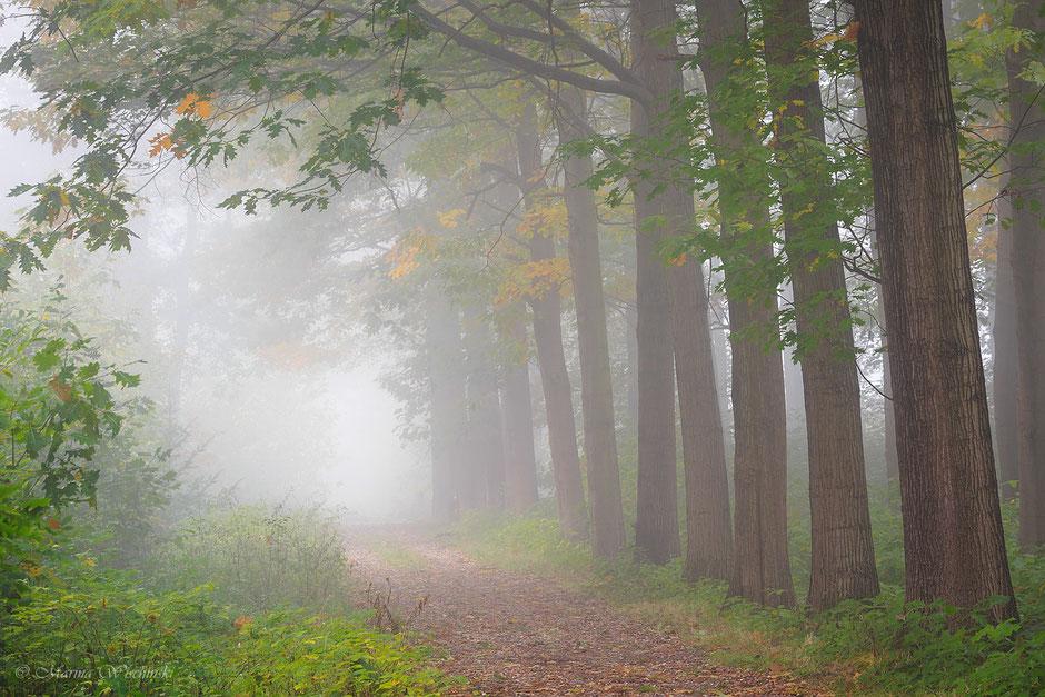 Baumreihe am  Wegesrand