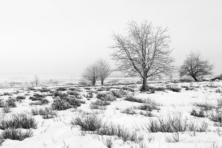 Karge Winterlandschaft in s/w