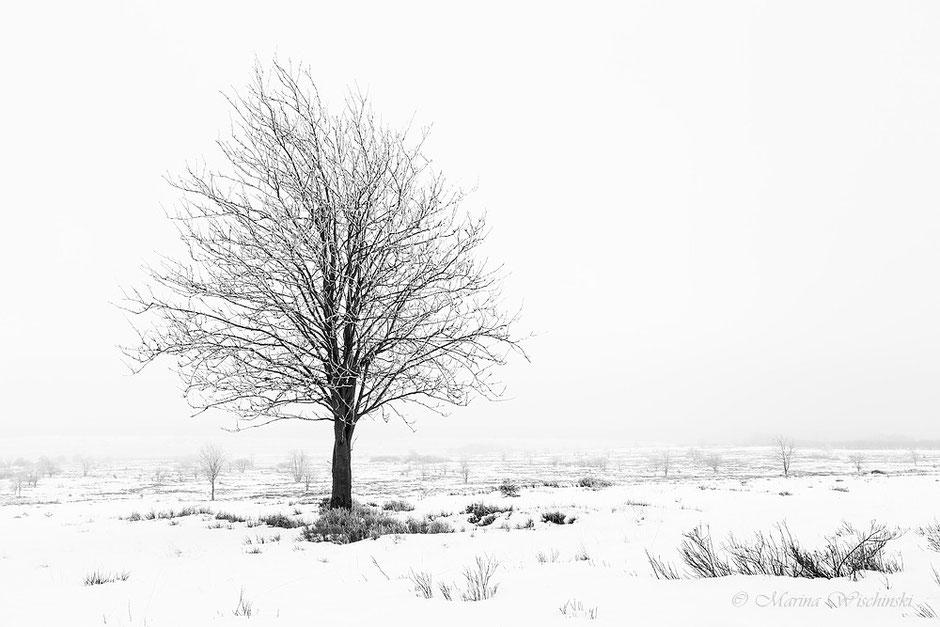 s/w Variante vom Winterlichen Baum, in Schneelandschaft