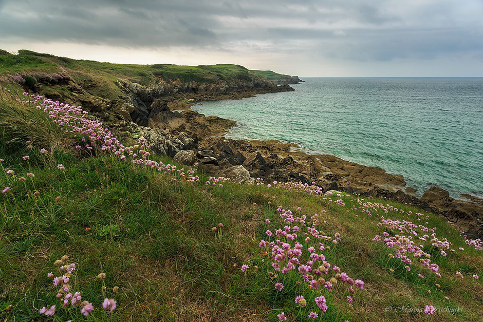 Raue Küstenlandschaft im Nordwesten der Bretagne / Finistère