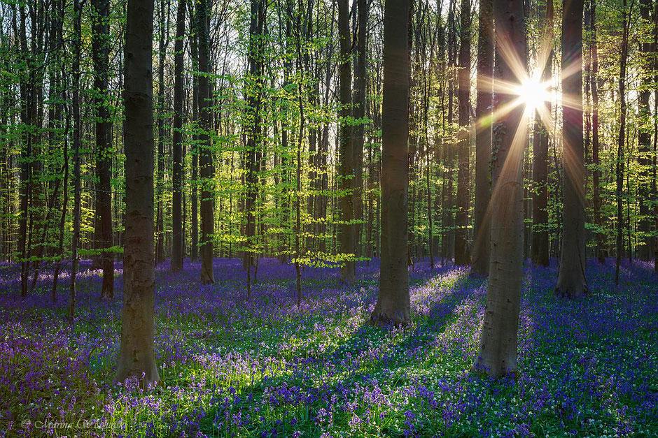 Sonnenstrahlen durchdringen den Wald