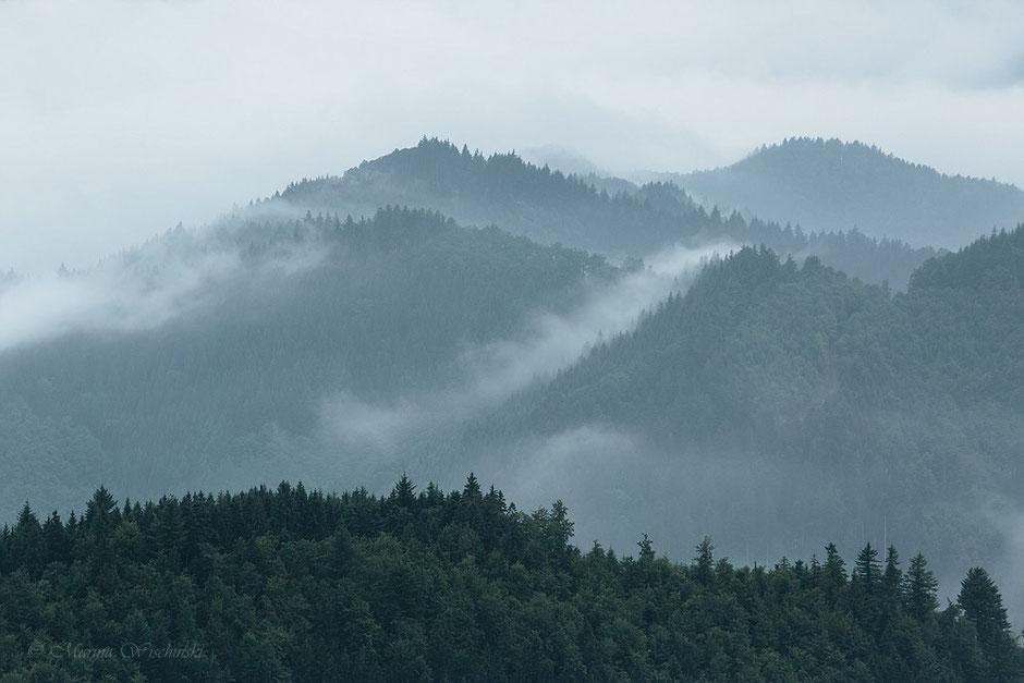 Der Nebel, ständig in Bewegung