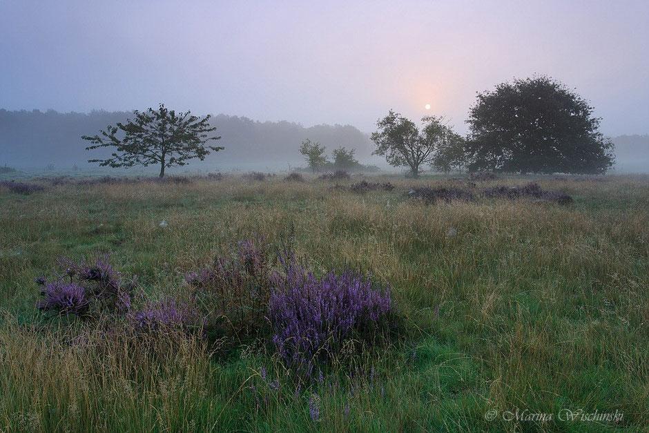 Am frühen Morgen in der Heide