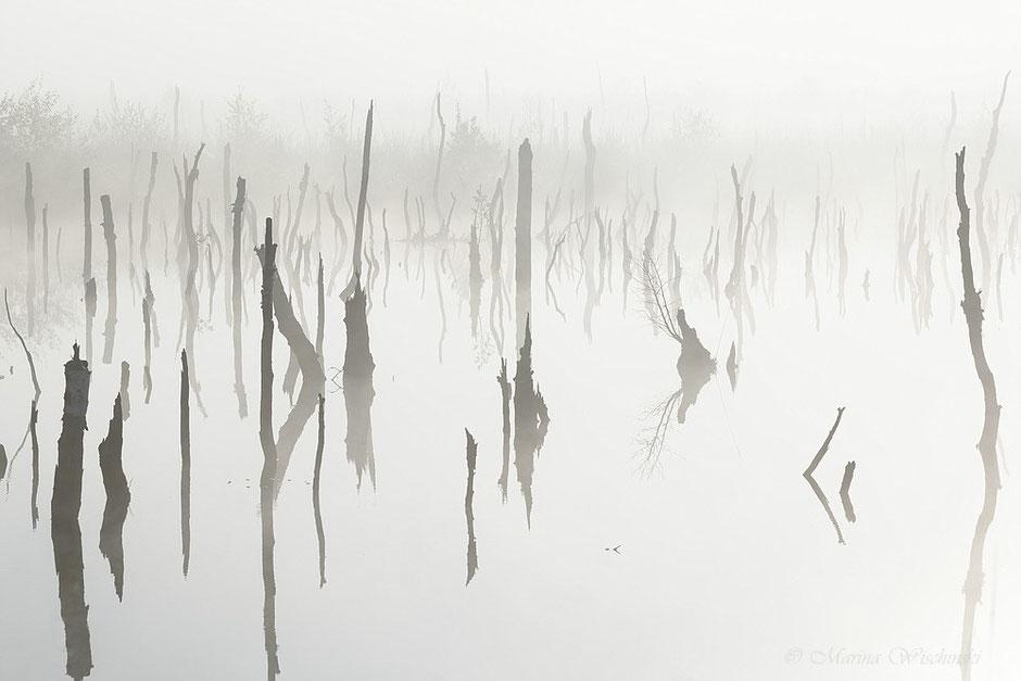 Dichter Nebel umschließt die abgestorbenen Stämme