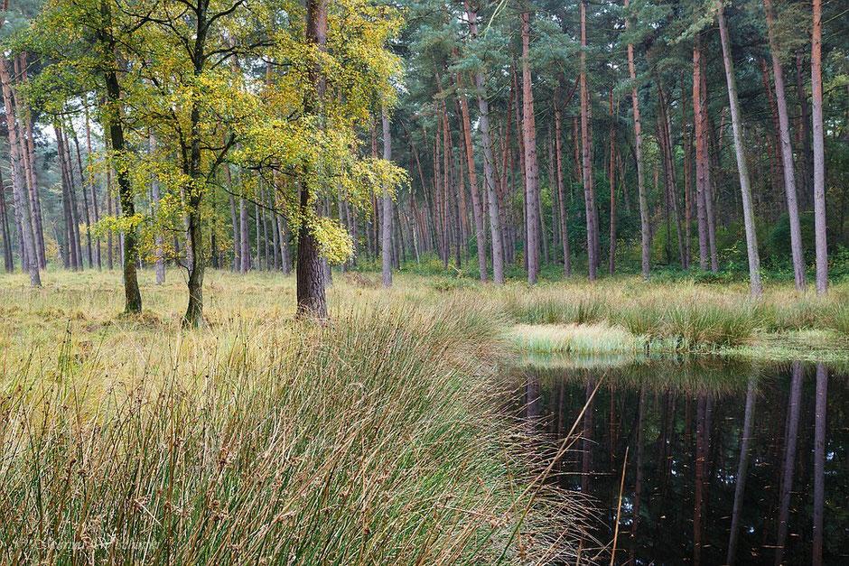 Herbstliches Heidemoor