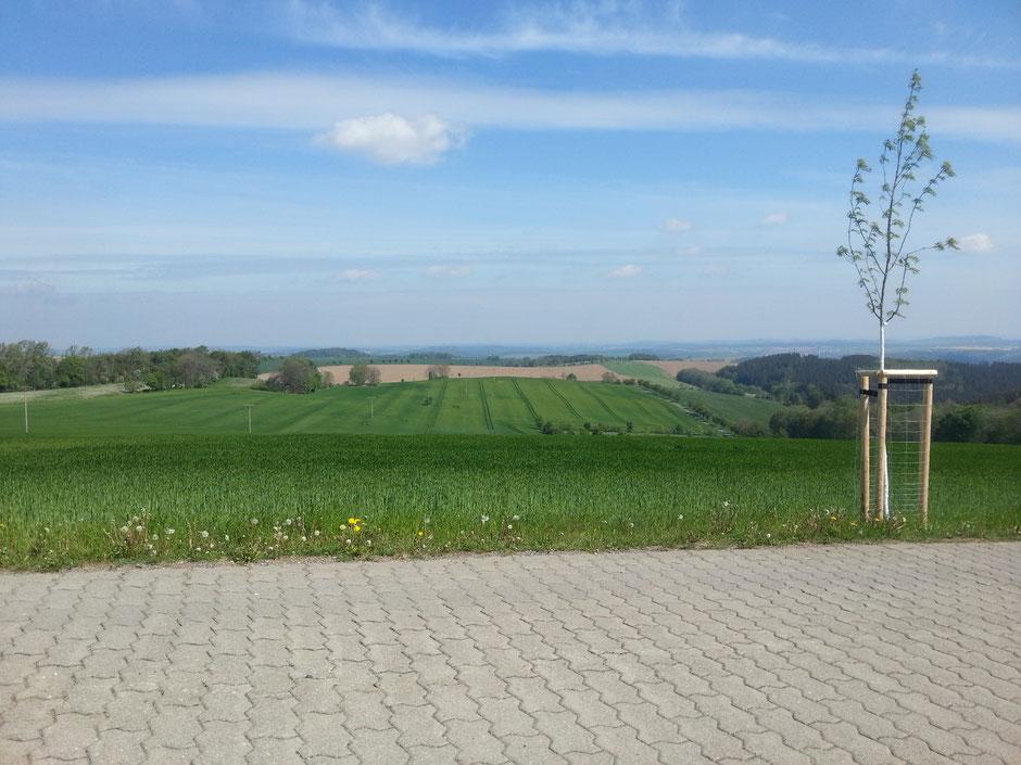 Mittelweg hinter Naundorf mit Blick nach Dresden