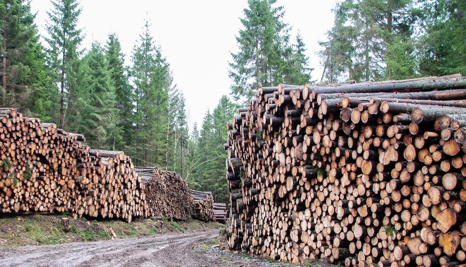 Ihr Berg Schwedenhaus entsteht aus dem Rohstoff Holz und wird ein Passivhaus