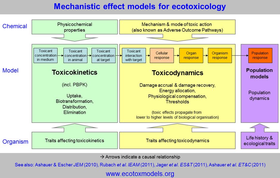 "Conceptual models for ecotoxicology and chemical risk assessment. Toxicokinetics are ""what the organism does with the chemical"" and toxicodynamics are ""what the chemical does to the organism""."