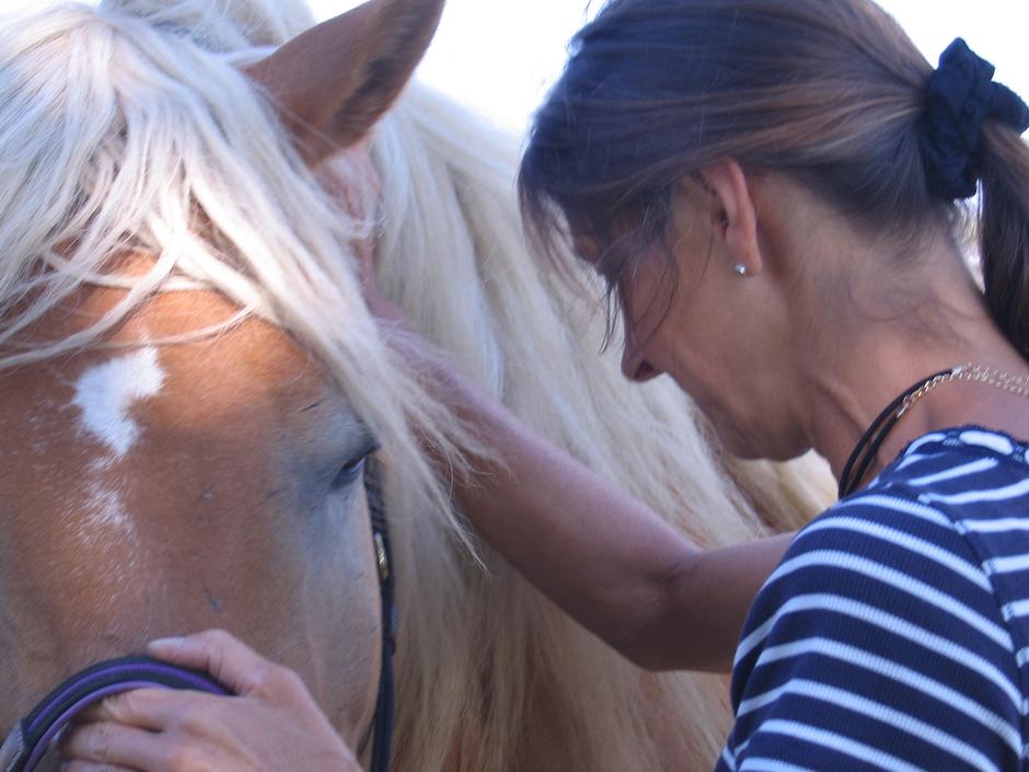 Osteopathische Behandlung am Pferd duch sanfte manuelle Techniken