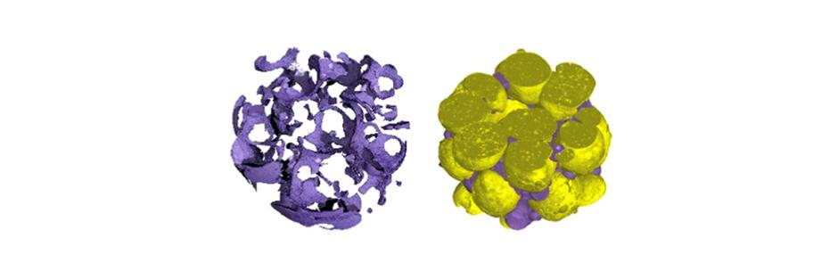 Image : vue 3D d'un biofilm bactérien (en mauve) agrégé sur des particules solides de biolite (en jaune)