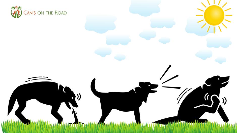 Hundetraining, Stress beim Hund