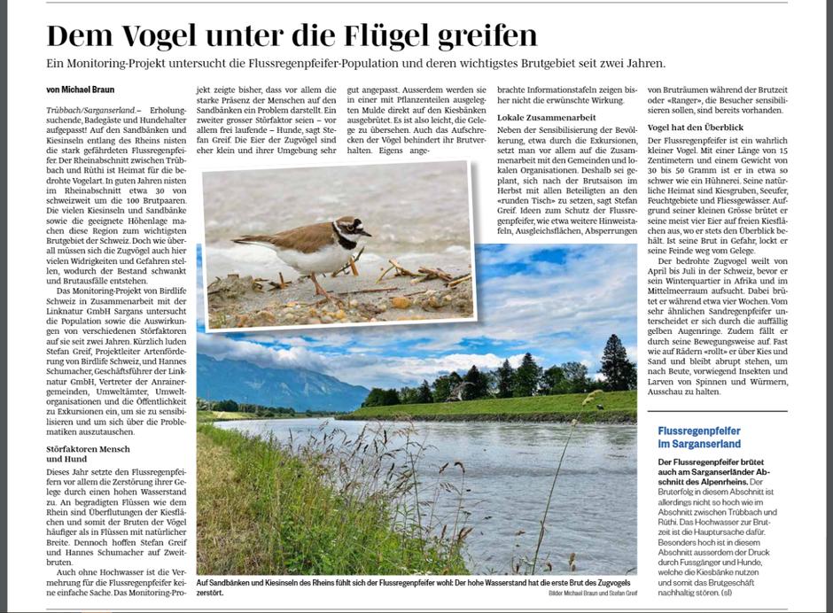 Der Flussregenpfeifer war auch Thema in den Zeitungen (Bild: Sarganserländer vom 1.7.2021)
